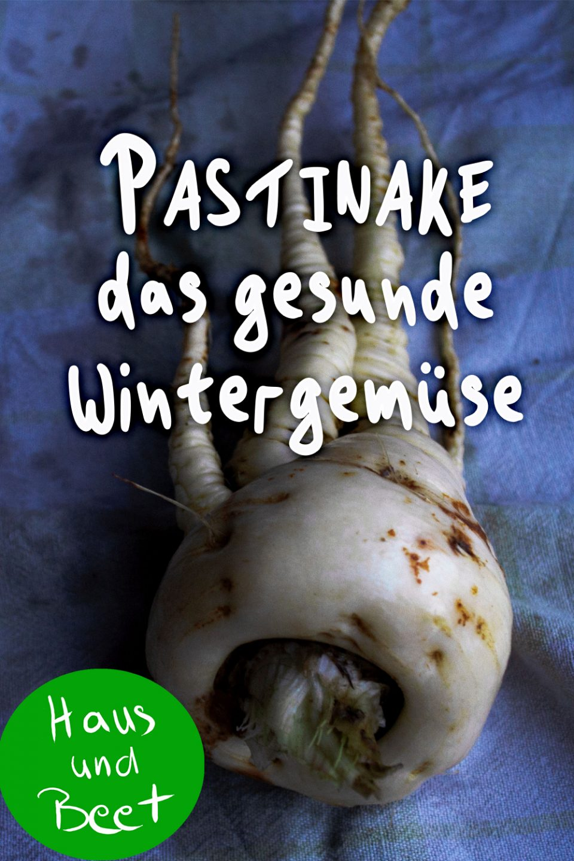Pastinake Wintergemüse
