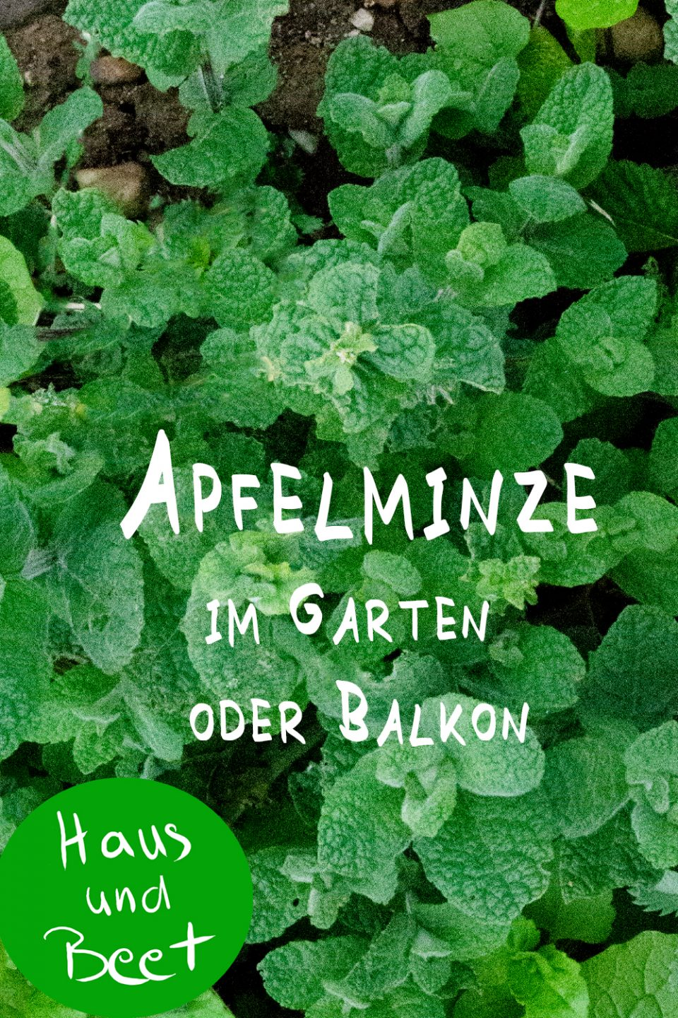 Apfelminze