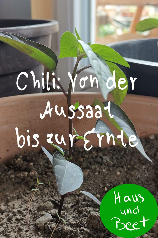Chili pflanzen: Von der Aussaat bis zur Ernte