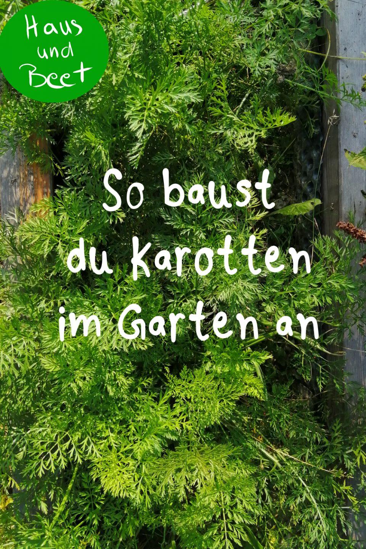 Karotte anbauen im Garten und Balkon