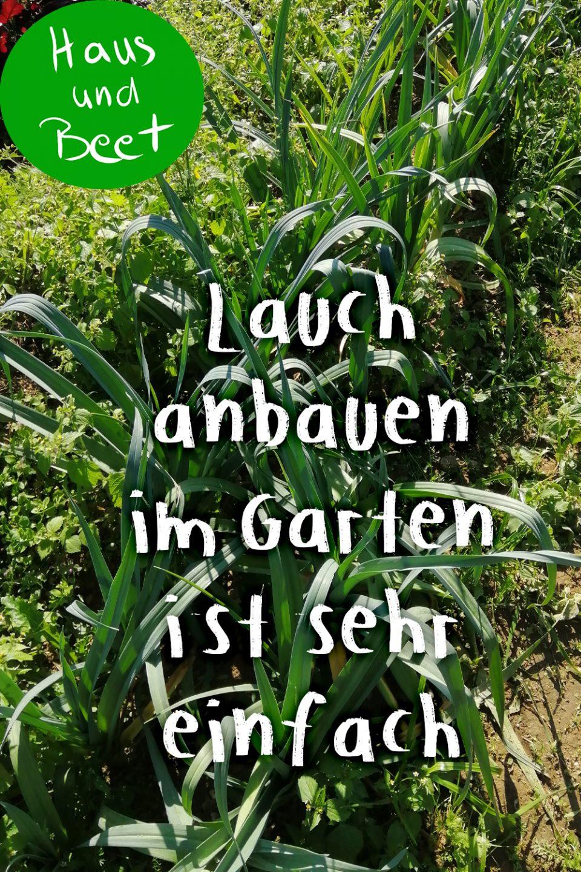 Lauch im Garten pflanzen