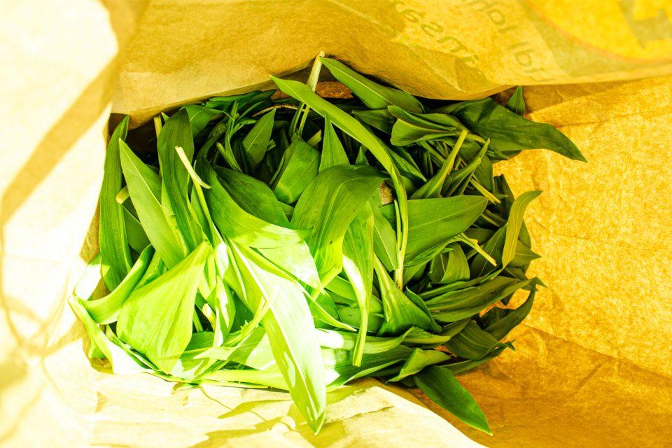 Bärlauch Blätter frisch gepflückt